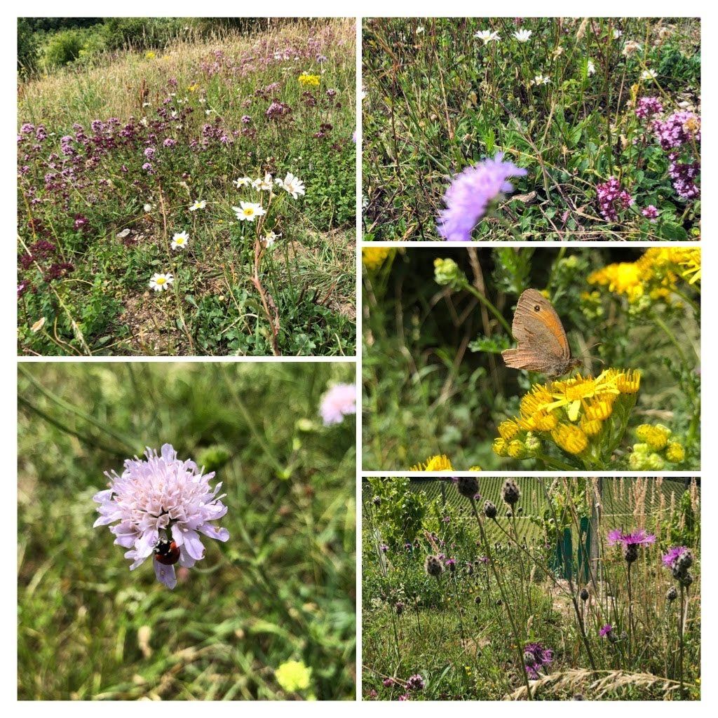 @WildlifeTrusts Can we have another #30dayswild? Outdoors is making it easy! pic.twitter.com/9TT7LY80wy