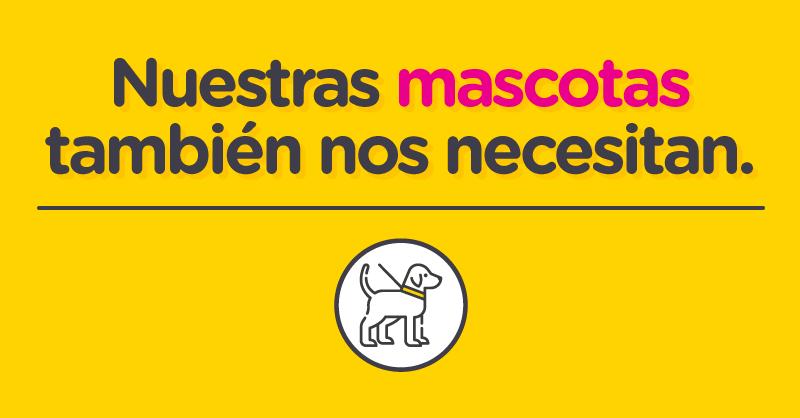 En la Ciudad también podemos ayudar a nuestros mejores amigos de cuatro patas 🐾🐾 durante la pandemia. Enterate cómo colaborar 👉🏾https://t.co/R6wPRST4oq en el cuidado de perros 🐶 y gatos 😺 de pacientes con Covid-19 en recuperación. #BAParticipa ↔️ #CuarentenaResponsable https://t.co/P9ezKDvPhx