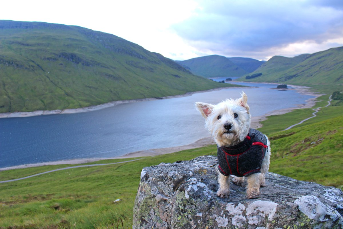 Last Friday evening on a wander around Loch an Daimh with the wee man in Glen Lyon, Perthshire. <br>http://pic.twitter.com/fJYXoozVxN