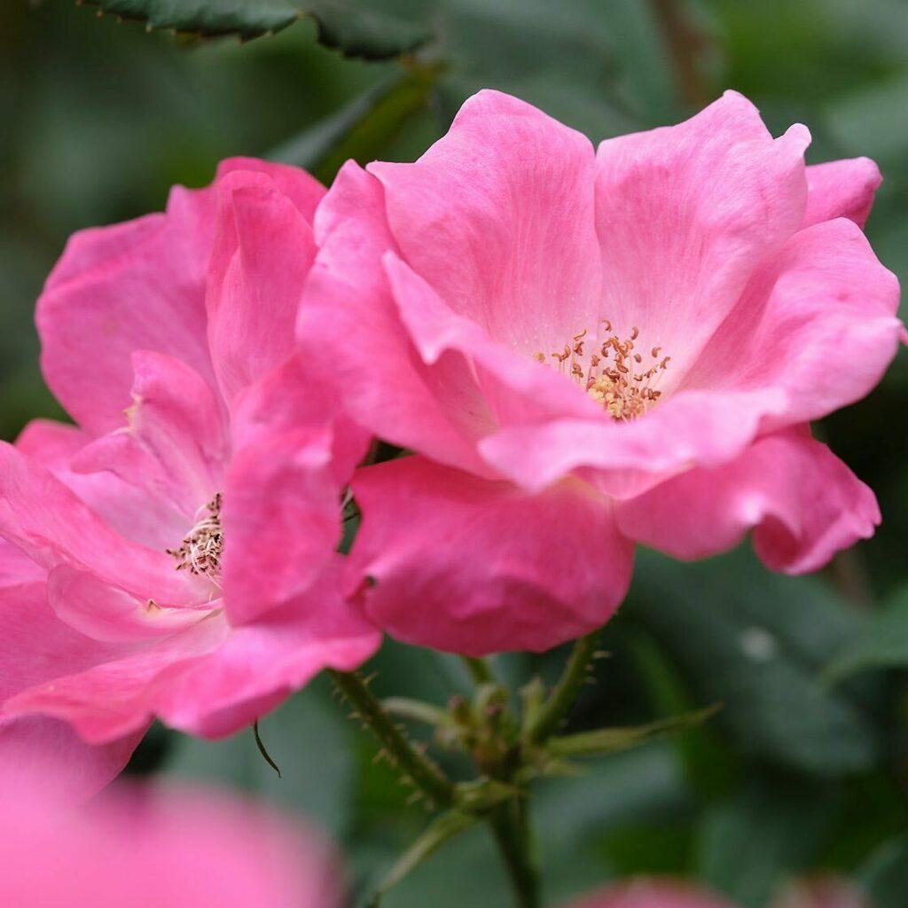 #flowers #nature #富士フイルム #fujifilm #xt3 #fujixseries #xf90mm #instagramjapan #japan https://instagr.am/p/CCmV36FJNSp/pic.twitter.com/2gbDpzd0lC
