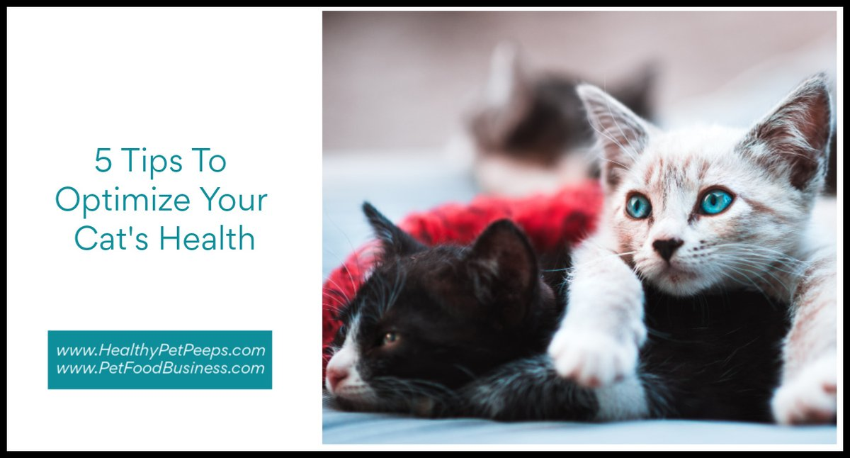 5 Tips To Optimize Your Cat's Health  https://www.healthypetpeeps.com/2020/07/5-tips-to-optimize-your-cats-health.html …  #cat #cats #cathealth #cattips #catlover #catlife #lifewithcats #catmom #catdad #catlady #meow #kitty #kittylover #kitten #kittens #catsoftwitter pic.twitter.com/54Cu84yxx3