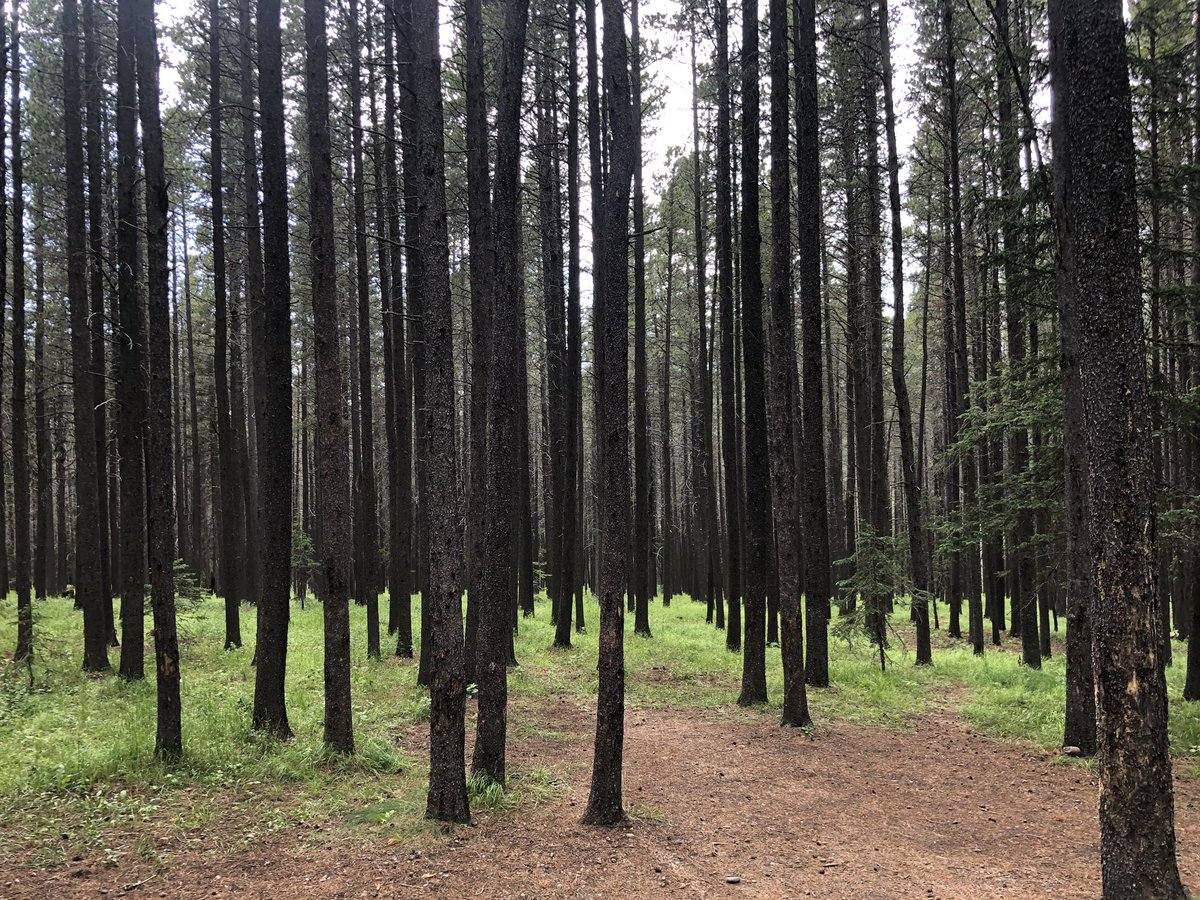 Destination Lodgepole. #cypresshills #abparks #camplife pic.twitter.com/pb3m3aXXhj