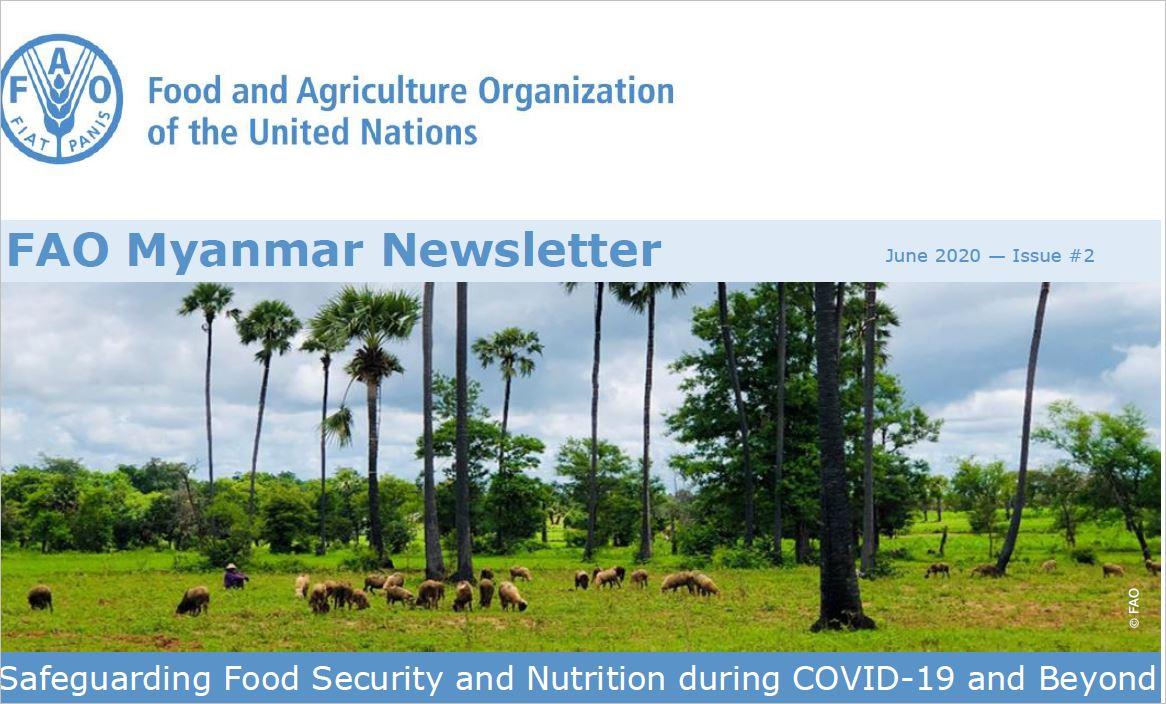Just published! @FAO Myanmar Newsletter, June 2020 - Issue #2  👉https://t.co/IkA43QVtbN https://t.co/9MEO6yhYbr
