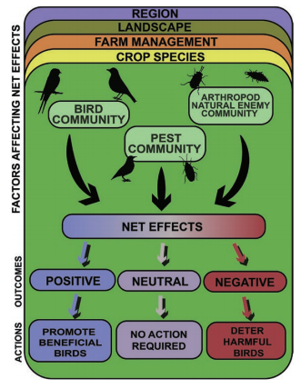 Contribution of #birds to pest control ➕ and ➖. Need to do the same review for #bats @batstothefuture https://t.co/Z9ezOtLjsU