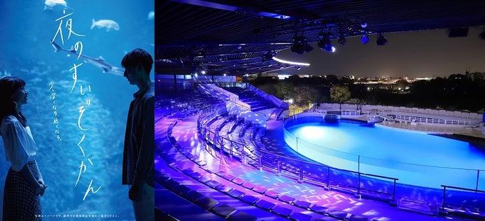 京都水族館で夜限定イベント「夜のすいぞくかん」幻想的な雰囲気と夜のいきものの姿を観察🐬🐠🌴💛#京都水族館 #水族館▼写真・記事詳細はこちら