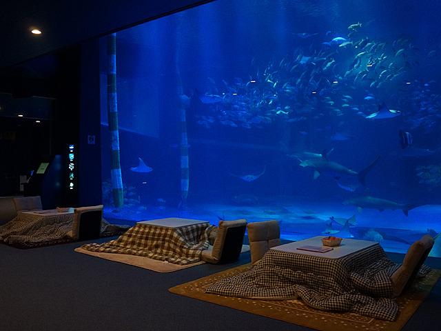 こたつに入って水族館!というイベントがありました