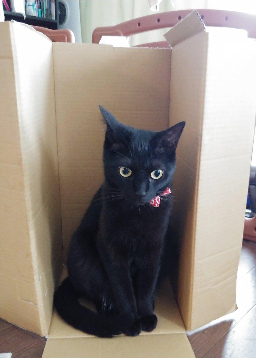 816日目。配偶者が段ボールを立てて置き始めたので何をするのかと思えば、黒猫がノコノコ誘い込まれてきた。座った瞬間に「黒猫ンゲリヲン初号機!!リフトオフ!!」と言いながら出撃時の挿入曲を歌い始め、1歳児はよくわからないけど楽しそうだと足踏みしていた。黒猫は「?」としていた。