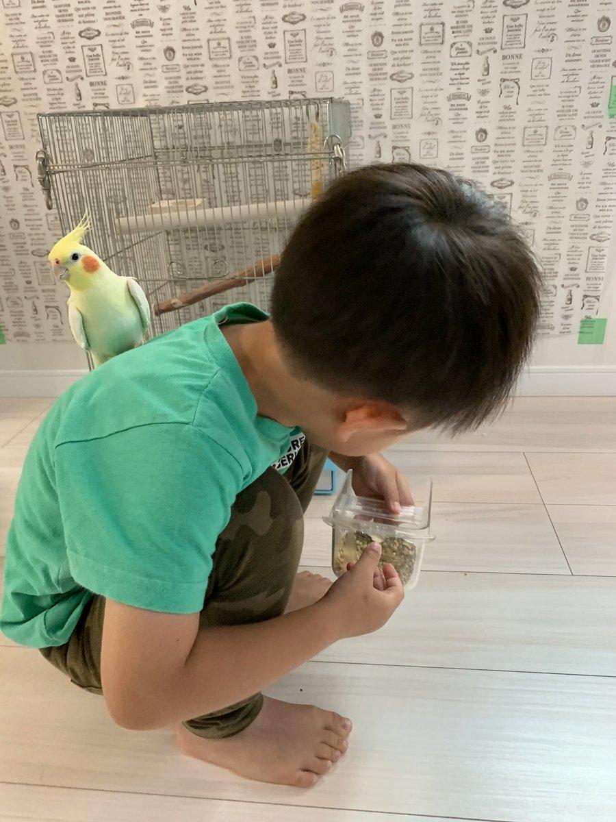 新しく任命された食糧支給係でありますか?よろしくお願いしますであります。#オカメインコ #cockatiel #インコ #鳥 #bird #Parakeet #兵長 #オザ兵長 #育児 #子育て #3歳8ヶ月