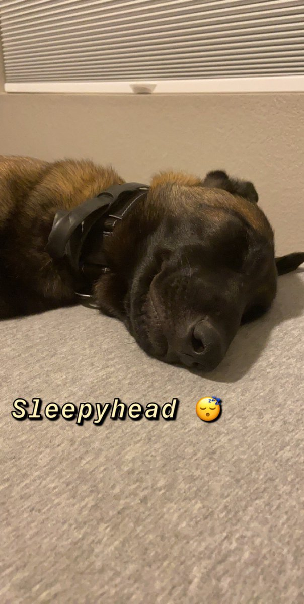 Finally asleep! #puppylife #belgianmalinoispic.twitter.com/birupfOLSA