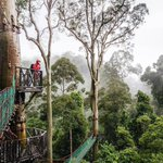 Image for the Tweet beginning: Danum Valley Conservation Area is