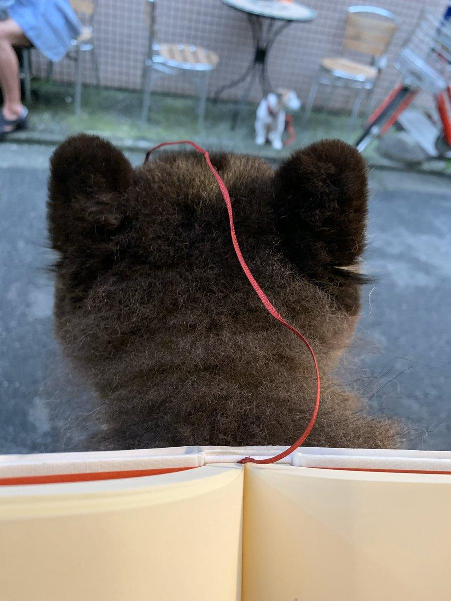 読書をしている。本の紐がたろ吉にからまってしまった。ちなみにこのこの紐は「スピン」というらしい、この紐がたろ吉に絡まらなかったらおそらぐぐることはなかった。