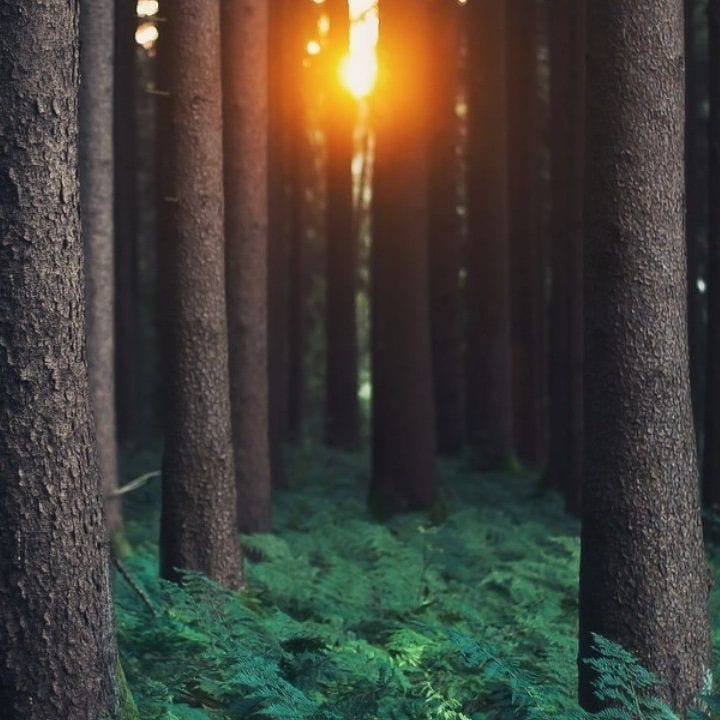 the truth is the only solid foundation to build on ... you can hide things but not the sun  #sunrise #sun #forest #forests #Twitter