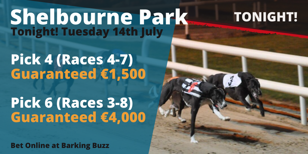Shelbourne dogs betting online xpress betting sportsbook