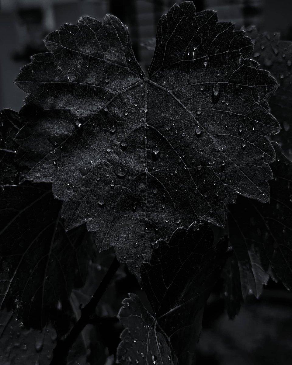 #sanmin_shots #macrophotography #macro_brilliance #macro_perfection #macro_secrets #macro_dark_art #bnw_greatshots #leafphotography #nature_perfection #macro_dark_art #bnw_planet_2020 #noirblanc #pocket_bnw #blackandwhiteuniverse #bnw_lumeilio #noiretblancphotographie #monochromepic.twitter.com/mN4OXCZzAB