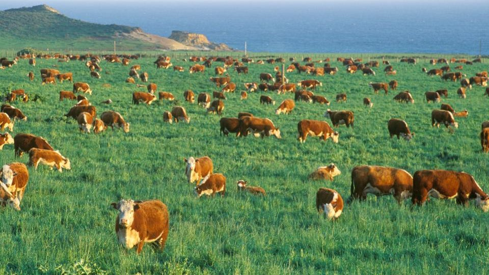 Burger King's plan to save the planet? Less-gassy cows on.forbes.com/6010GVN5i