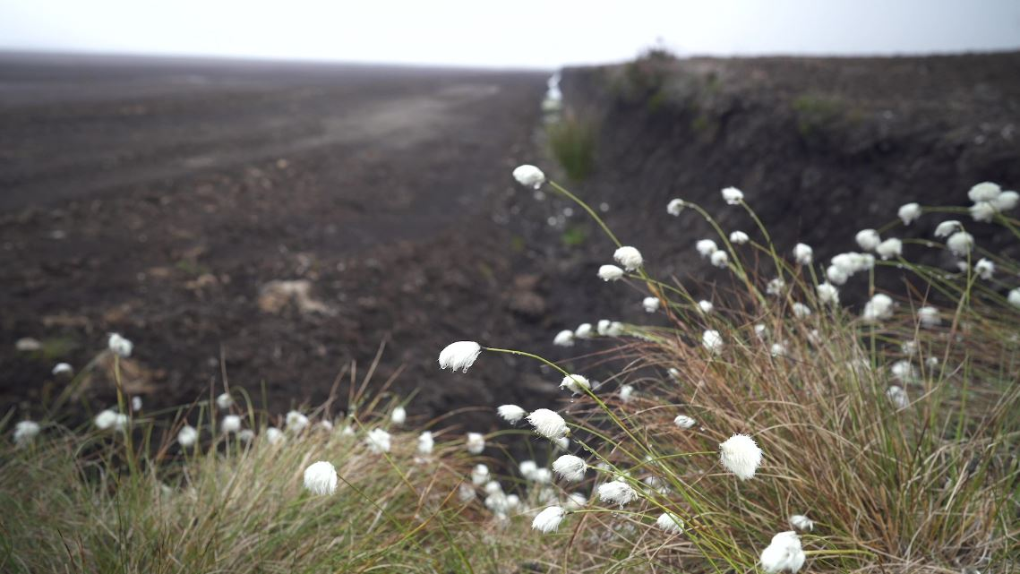 ICYMI last week we shared a blog about the damaging practices which threaten our peat ecosystems and why you should take the peat free pledge: bit.ly/peat-free-pled…