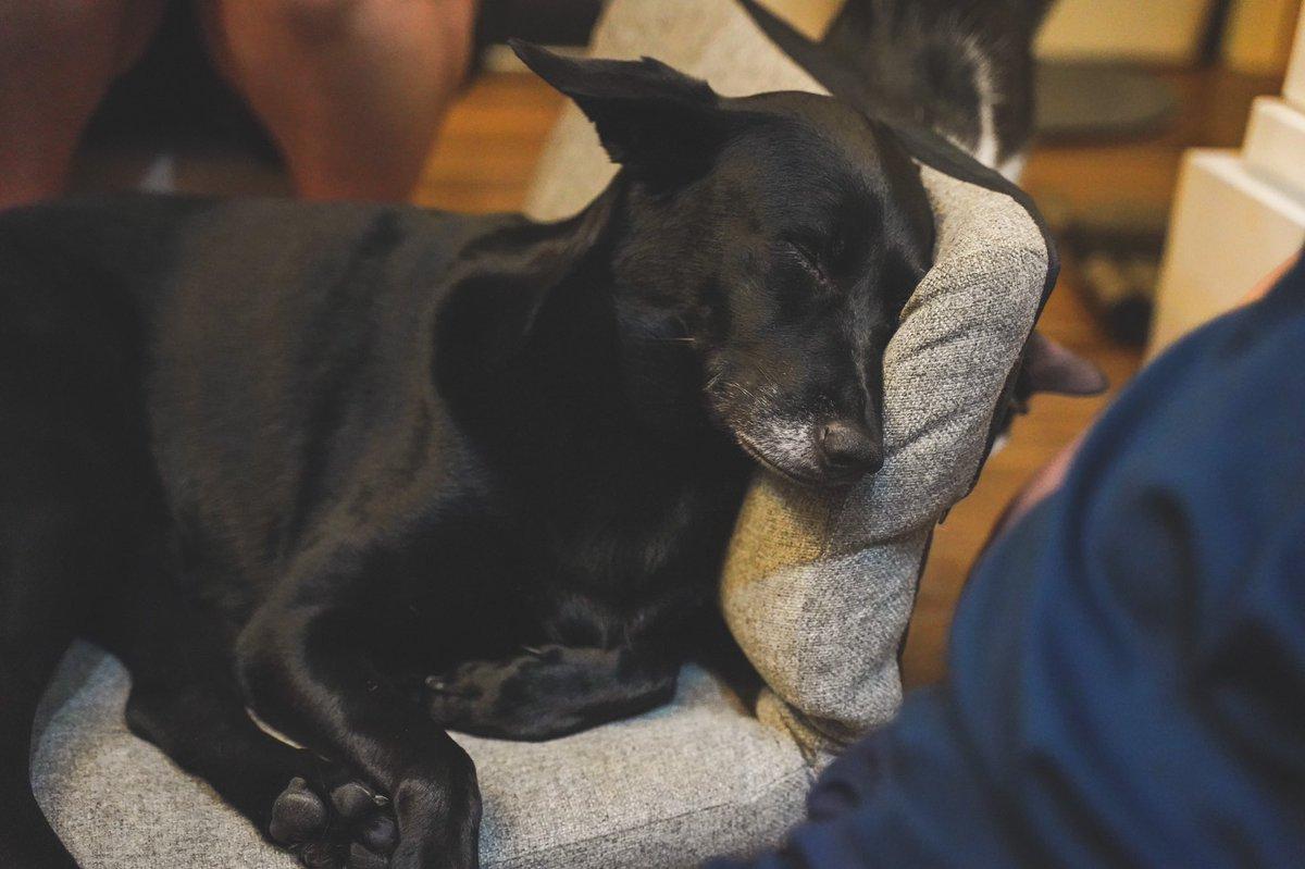 #puppylife #sonyalpha #sonya7iii #tamron2875 #sonyphotography #tamron #justgoshot #dogsofinsta #inspirationcultmag #heatercentral #depthobsessed #agameoftones #eclectic_shotz #puppylove #taipeigram #taipei #doglovers #doggylove #doggystyles #doglife #dogsofinstagram #dogpic.twitter.com/Znww3tg4Eo