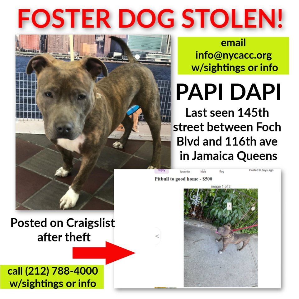 🚨🚨URGENT🚨🚨 Papi Dapi  Stolen & Posted On Craigslist🤬🤬  Who does this?? We know what will happen💔💔  #TeamAnimal Let's FIND him We are behind 8 days because of @NYCACC https://t.co/IE2jL7UfPV https://t.co/qfOA5qEPIQ