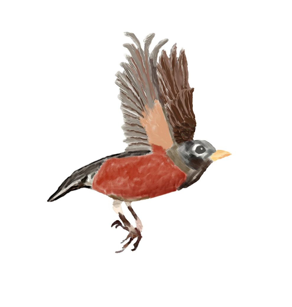 Birb #photoshopart #graphicdesign #birdpic.twitter.com/mU9xjT1oLL