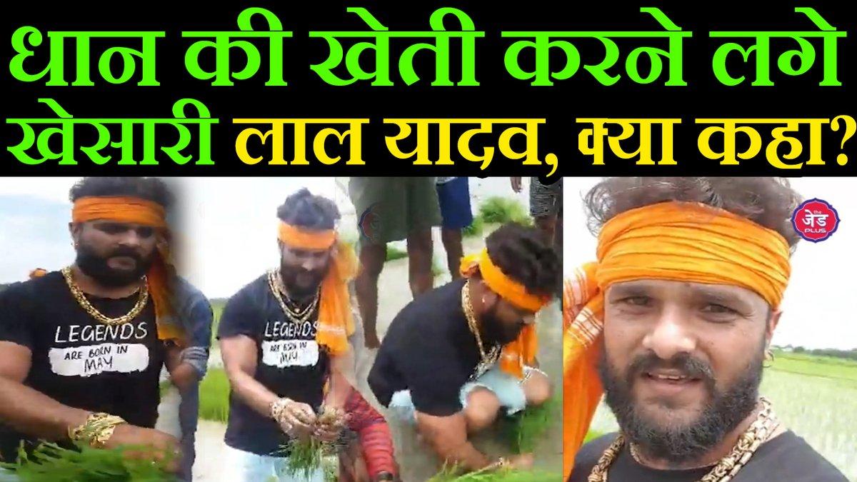 Bhojpuri Superstar Khesari Lal Yadav lockdown में धान की खेती करने लगे, अपने New Song के लिए ये कहा  वीडियो - https://t.co/7Jhrhw6V2Z  #Bhojpuri #KhesariLalYadav #Paddy #Song https://t.co/vnq9axeJtw