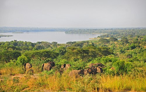 Elephants in #MurchisonFalls national park #Uganda. To view this and more of #wildlife on a #Ugandasafari, click the link below 👇 https://t.co/vB6qWmsYDT #Juvenilesafaris #UgandaWildlifeSafaris #VisitUgandaTomorrow  #elephants #bigfivesafari https://t.co/bMr28rZIml