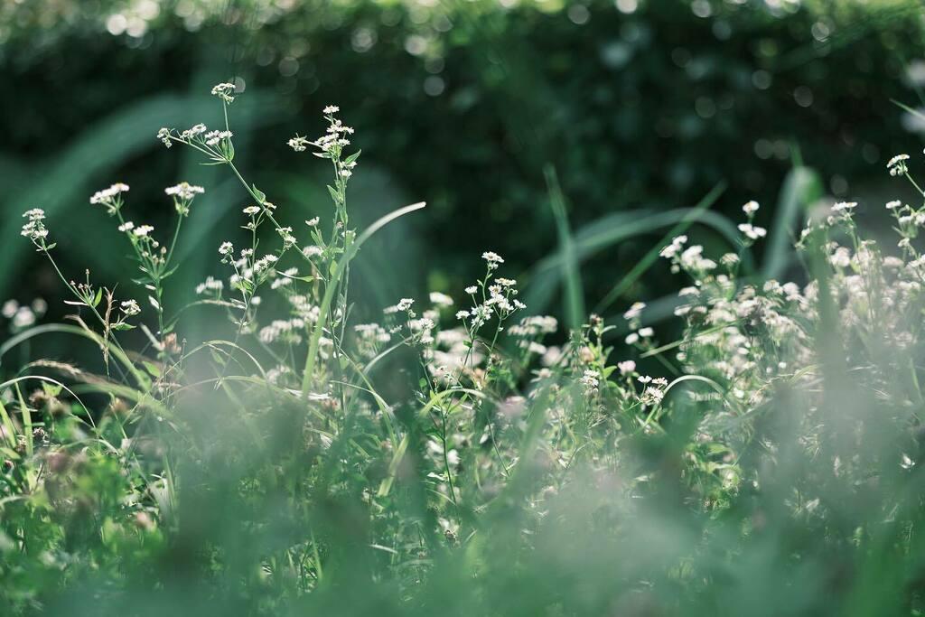 #flowers #nature #富士フイルム #fujifilm #xt3 #fujixseries #xf90mm #instagramjapan #japan https://instagr.am/p/CCo6qGPJtEx/pic.twitter.com/5kX9Nz1wgU