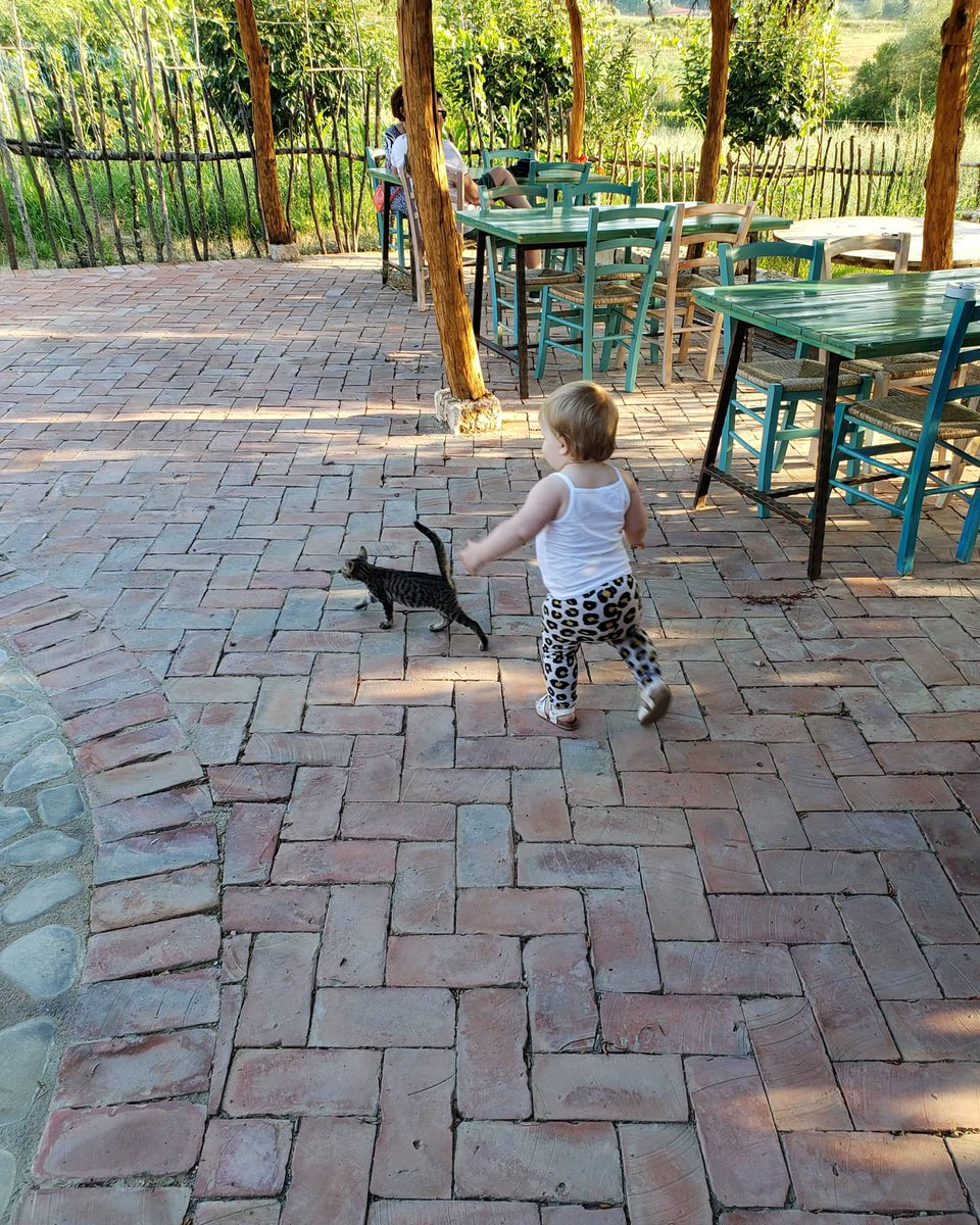 For those that liked my tweet about my daughters first word being kape kape kape while chasing a cat, here she is in action! #albania #firstword