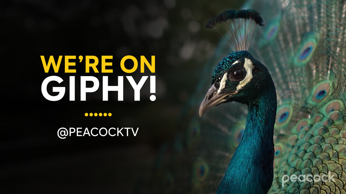 Were launching tomorrow, but we're on @GIPHY tonight! And we're feeling poetic… so please, hang tight. giphy.com/peacocktv