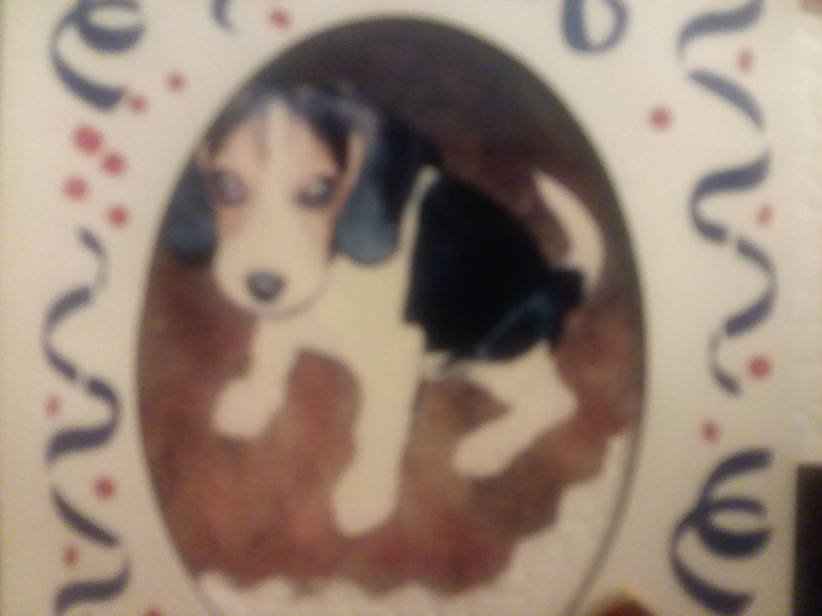 I remember my first dog but he was crazy lmao. I miss him 😔. *sorry my pic is blurry*