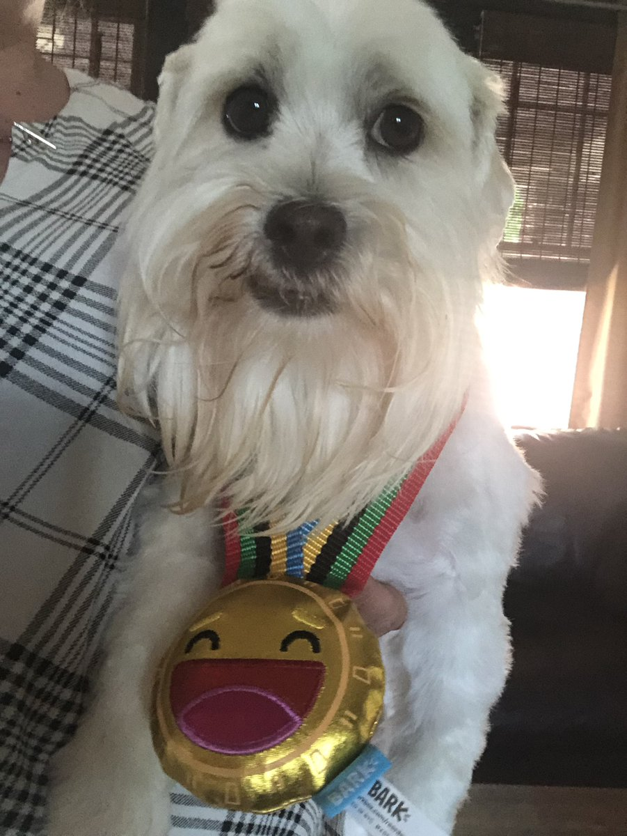 Thank you @barkbox  my little gold medalist LOVES this month's box pic.twitter.com/yZ5N24DfqE