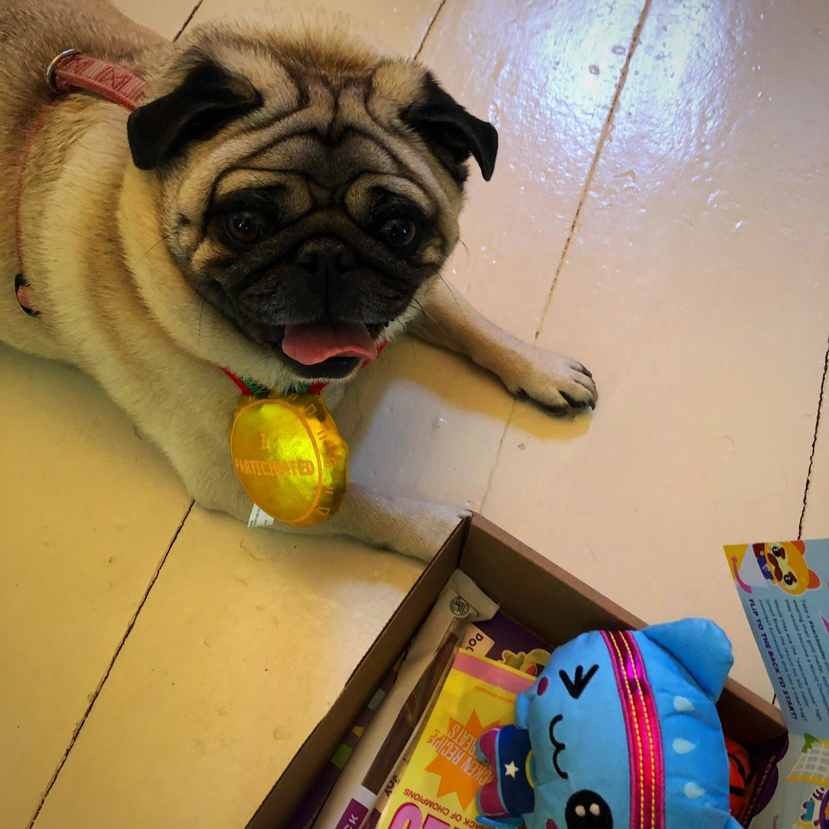 Marzipan is #1  ... in our eyes.  Thanks to #PugChat hosted by the pawsomess host @HamiltonPug for this awesome @barkbox .    WATCH THE UNBOXING and let me know who's more excited me or Marzipan. https://youtu.be/mLBvWa52unM.   #barkboxdaypic.twitter.com/sS4w6PxKnC