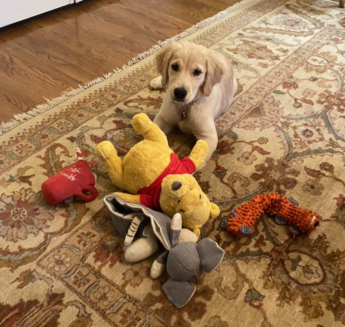 Mercer and all of her favorite toys! 🐶 https://t.co/bGal0ui6E2