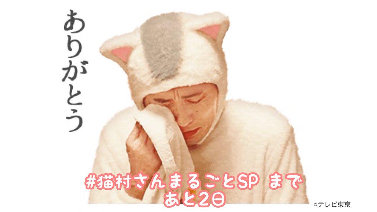 豊 さん 今日 松重 村 猫 の