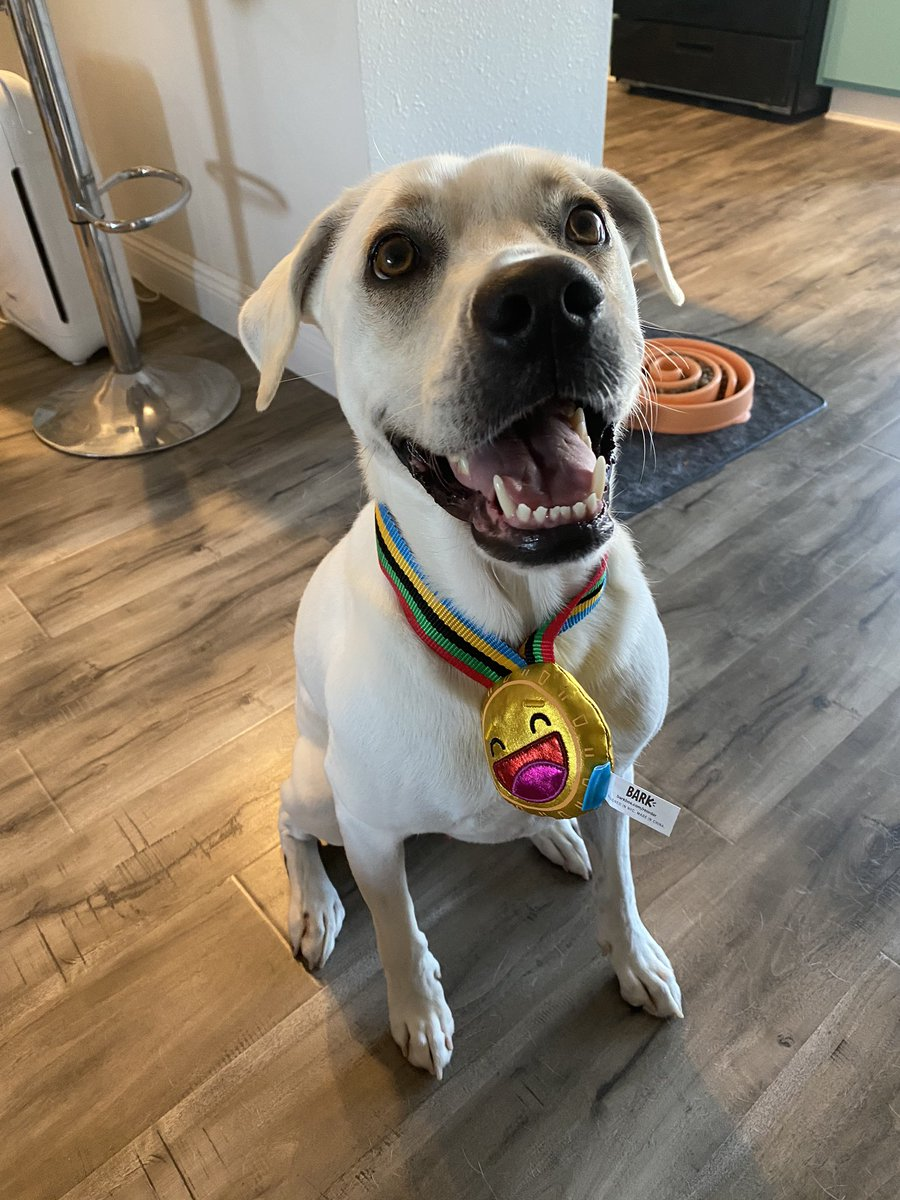 Fenway got a participant medal from @barkbox today. I haven't taken it off him yet. He's running around the house wearing his medal everywhere. Extra happy boy tonight pic.twitter.com/gycNkIdpkk
