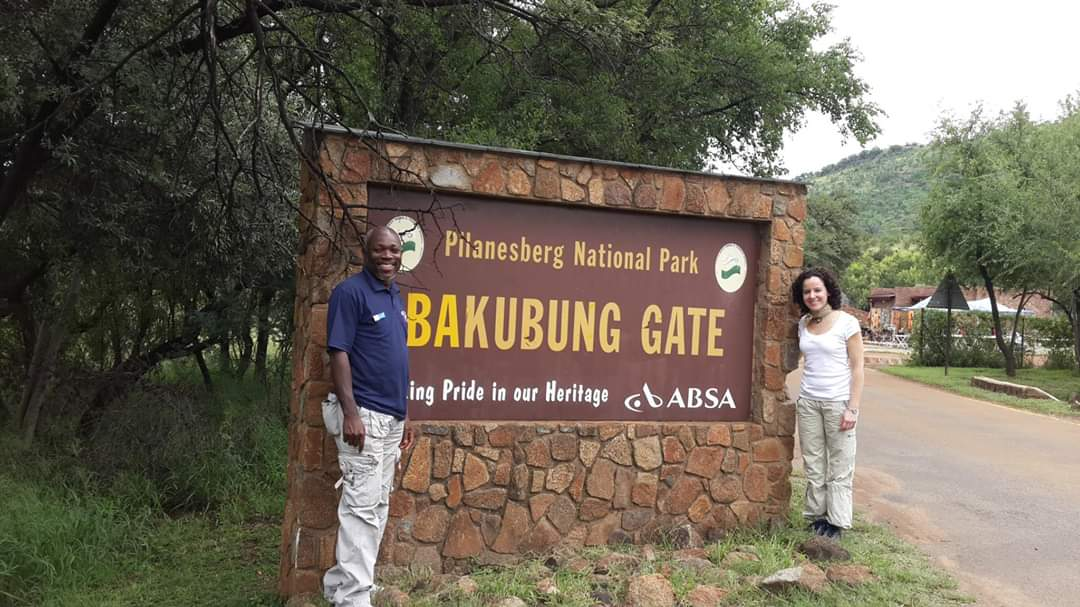 Do you know that you can also fly direct from Joburg to Pilanesberg National Park, stay i  #PrivateGameLodge, have the most fabulous #GameDrive Safari #travelpreneur #Travel #travelblogger #WillyTheTravelGuru #TravelTips @southafrica @Tourism_gov_za #Daytours #Safariphotopic.twitter.com/ZjEmIUoCGA