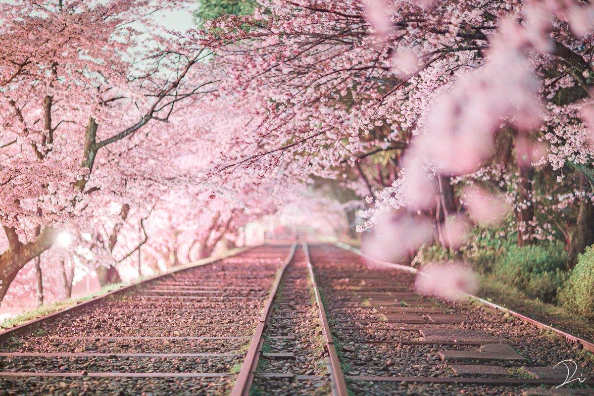 そして普段は京都の四季の写真撮ってます!よければ見ていってください。