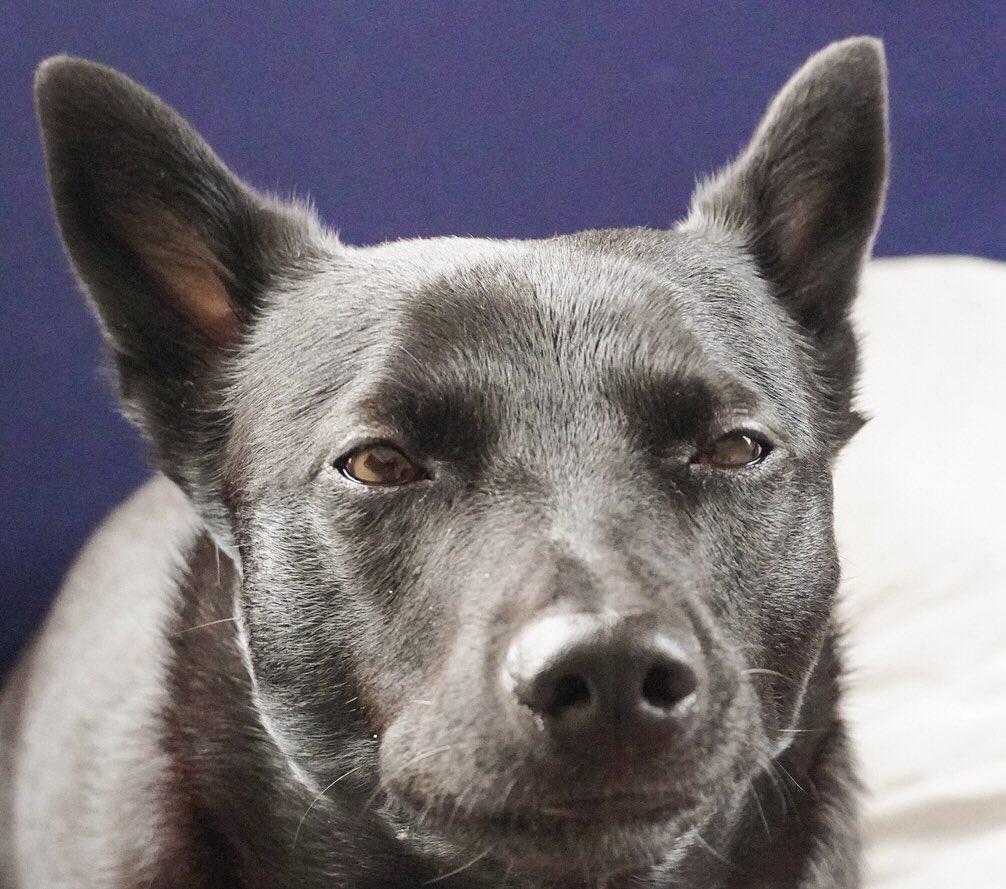 大好きな焼いた干し芋をゆっくりと味わう愛犬です
