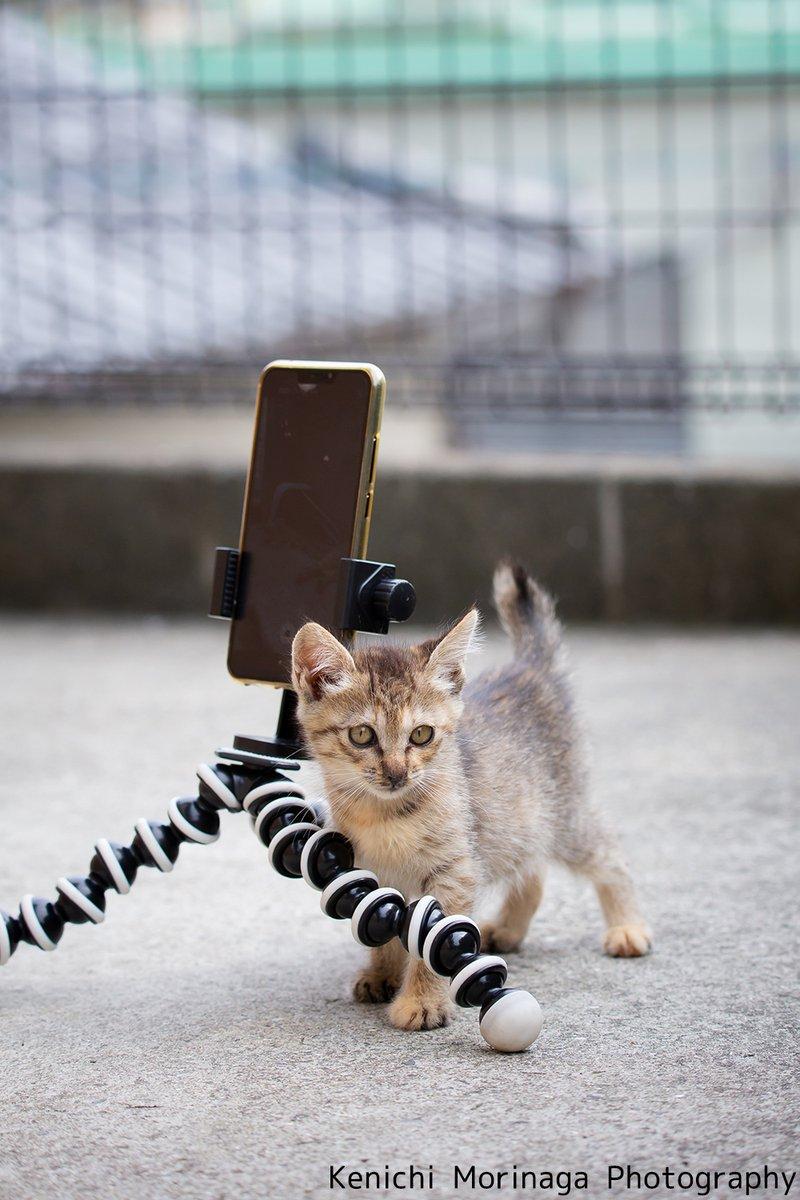 ネコ カメラマン 本能