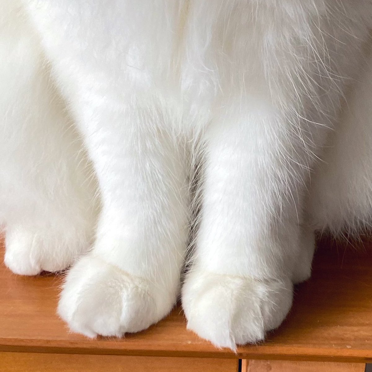 みんなの疲れを癒す猫足をどうぞ🐥