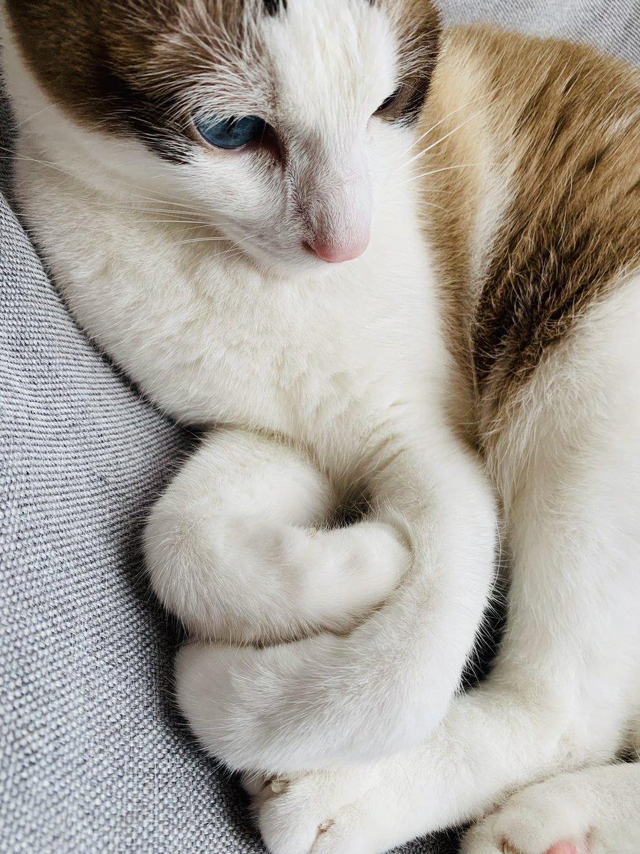 猫は液体ですが、最新の研究により、うどんでもあると考えられています。