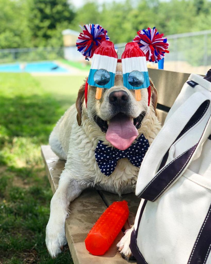 Long weekend alert! Can you tell Huck is ready to celebrate? What's your fourth of July outfit looking like? #4thofJulyWeekend  📸: huck_the_pup https://t.co/Ubl4Y82UXk