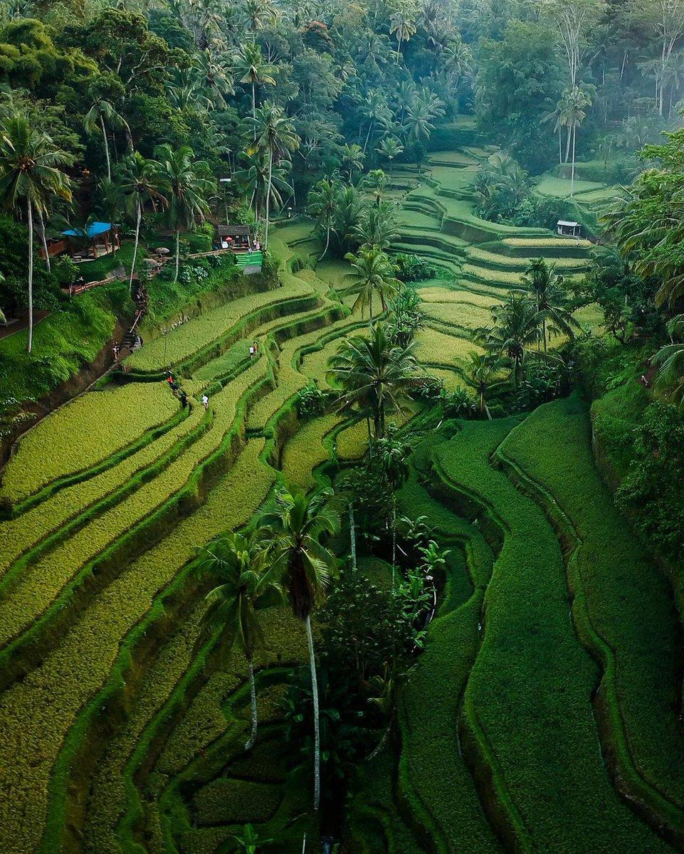 If the world was free of problems, paradise would lose its value - Mufti Menk  .  Tegallalang Rice Terraces . . . . #bali #kalimantan #explorebali #hiking #travelling #thebalibible #papua #traveler #ubud #indovidgram #balilife #thebaliguru #indozone #tourism…pic.twitter.com/5Por6TlzEI