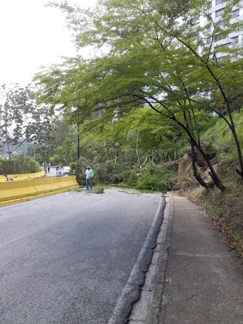 Largas y fuertes lluvias en nuestro municipio #ElHatillo han provocado caídas de árboles en algunos sectores. Nuestros equipos de @PC_ElHatillo, IAGA y Obras ya trabajando en esto. #AlertaElHatillo https://t.co/L0T9N7smAS