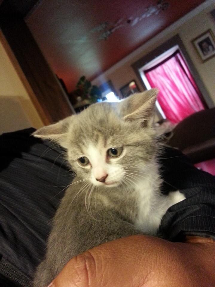 @Markjpwns I adopted Baby Yoda cat before Baby Yoda was a thing :)