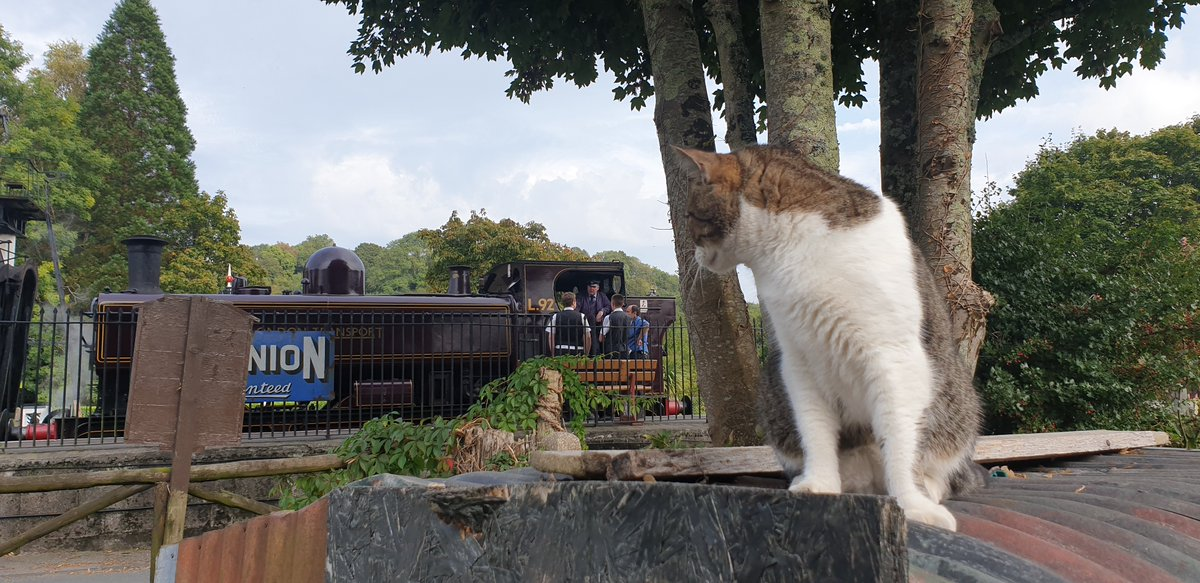 Like most good stations, Buckfastleigh has a #station #cat. Concerned fans will be pleased to know that Oscar is in fine form and being looked after by one of our volunteers. Although he's watching fewer trains.