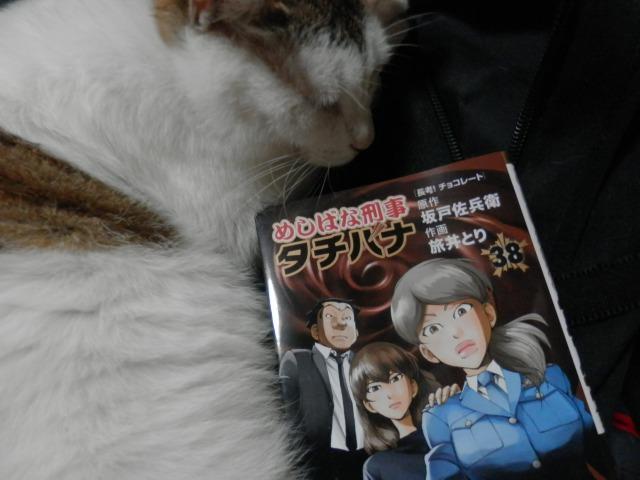 夢の中のユウ君(yuu・♂)。  #猫 #ネコ #ねこ #保護猫 #保護猫出身 #にゃんすたぐらむ #可愛い #ねこ好きさんと繋がりたい #寝る #めしばな刑事タチバナ #チョコレート #明治 #ロッテ #森永 #yuu #neko #cat #catstagram #instacat #chocolate #meiji #lotte #morinaga #sleep