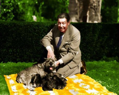 Lovely picture of #WarnerOland wearing a fashionable suit with fashionable doggies on a fashionable blanket, must be #FashionFriday pic.twitter.com/ppITyBU7AS