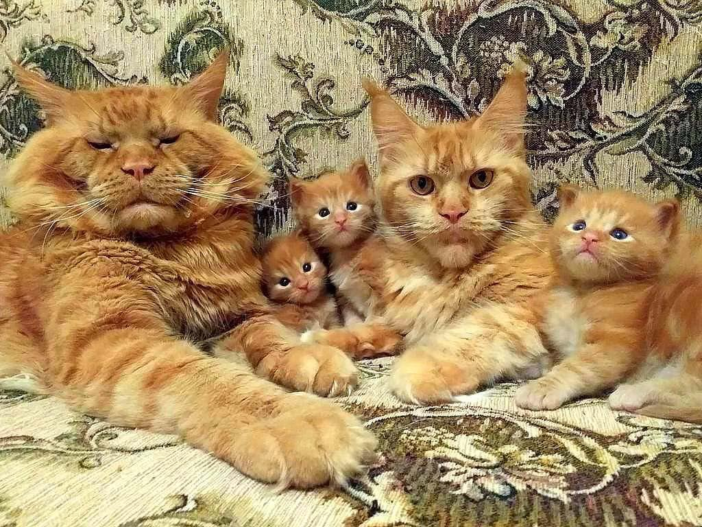 Family Portrait  #AdoptDontShop #Veganuary #GoVegan #vegan #cats #catsoftwitter #caturday #USA #weekend #uk #animals #pets #catsofinstagram pic.twitter.com/uhoiXv3U1W  by Cats Footprint