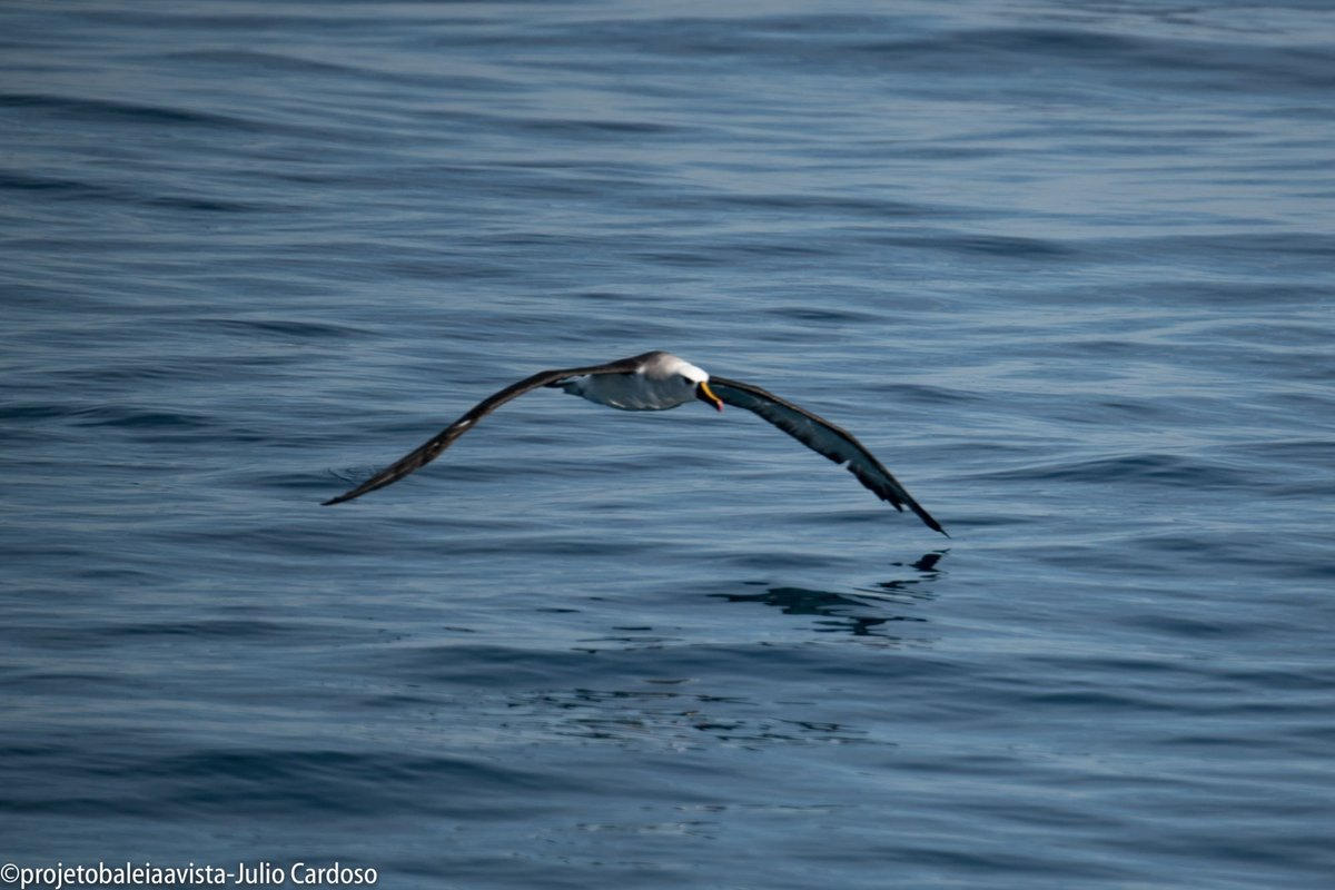 Mais de 100 albatrozes são avistados no litoral de São Paulo https://t.co/j1l4XRgSDN https://t.co/bTGIb9HhkR