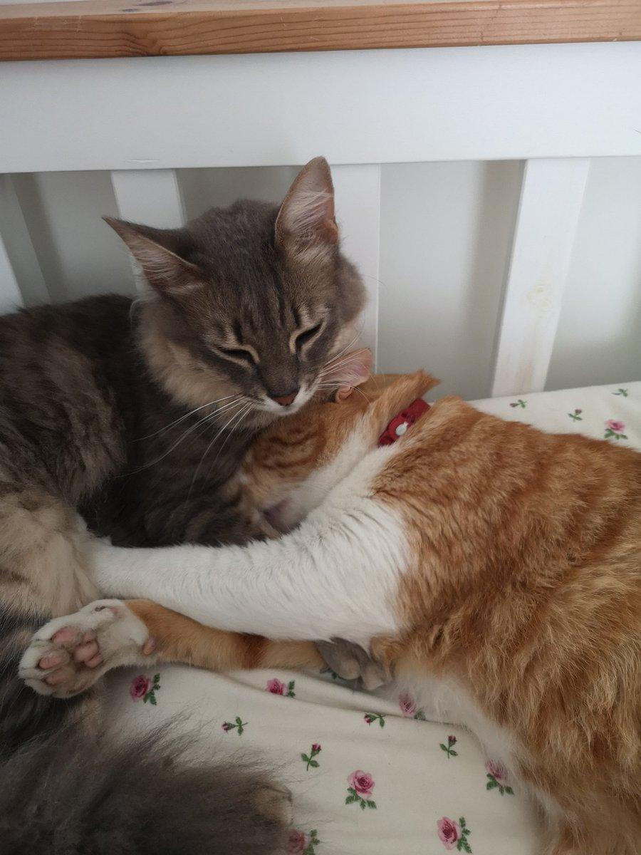 @nickynoo007 I'm so sorry. Kitty hugs